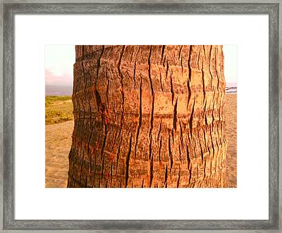 Coconut Palm Framed Print by Charles  Jennison