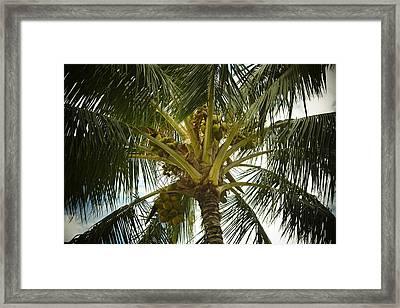 Coconut Palm Framed Print by Frank Wilson