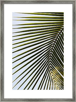 Coconut Palm Leaf Framed Print by Tim Gainey