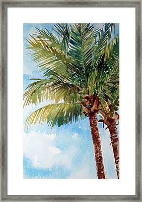 Coconut Palm Framed Print by Peter Sit