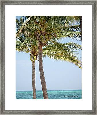Coconut Palm Tango Framed Print