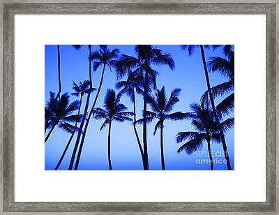 Coconut Palms At Dawn Framed Print by Dana Edmunds - Printscapes