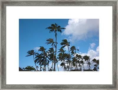 Coconut Palms - Oahu Hawaii Framed Print by Brian Harig