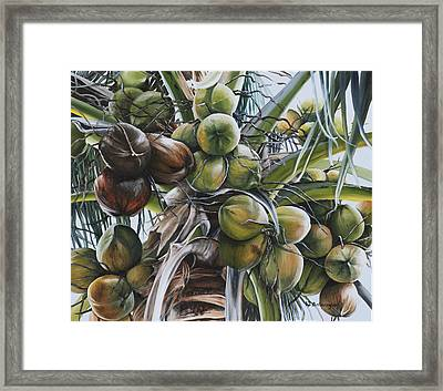 Coconut Profusion Framed Print by Wendy Ballentyne