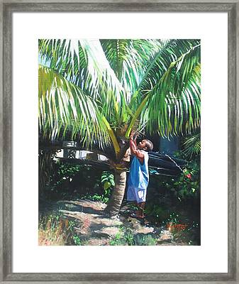 Coconut Shade Framed Print by Colin Bootman
