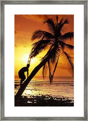 Coconut Tree Climber Framed Print by Sean Davey
