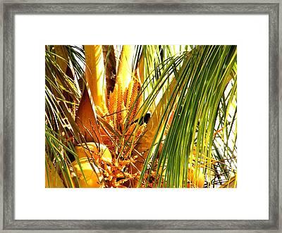 Coconut Tree Framed Print by Glenda  Jones