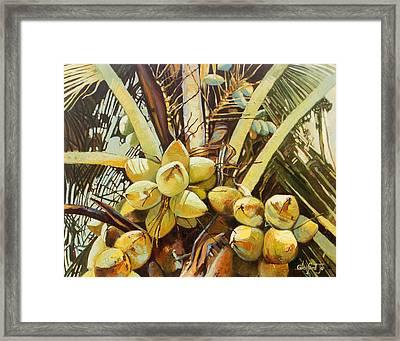 Coconuts Framed Print