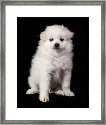 Cody On Black Framed Print by Mark Furnell