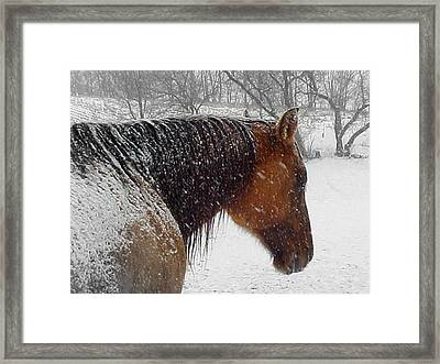 Cody Framed Print by Scot Johnson