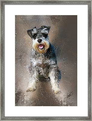 Cody Framed Print by Tom Schmidt