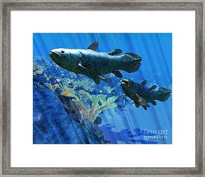 Coelacanth Fish Framed Print by Corey Ford