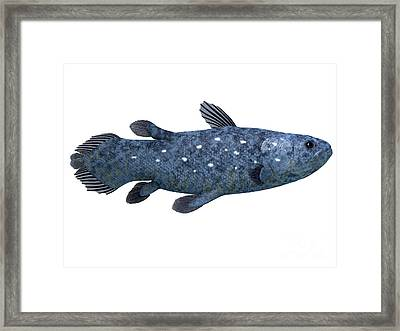 Coelacanth Fish On White Framed Print by Corey Ford