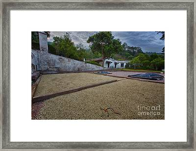 Coffe Production Framed Print