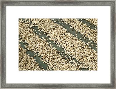 Coffee Beans Framed Print by Inga Spence