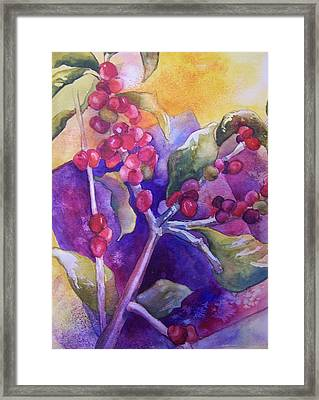 Coffee Berries Framed Print by Sandy Collier