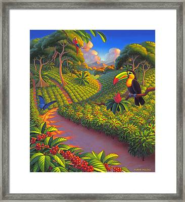 Coffee Plantation Framed Print by Robin Moline