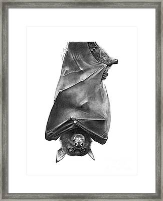 Coffie The Fruit Bat Framed Print