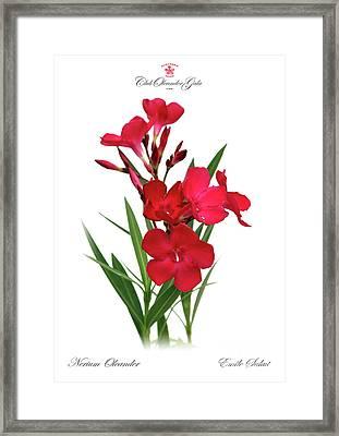 Cog  Nerium Oleander Emile Sahut Framed Print