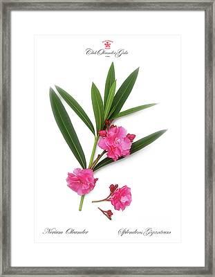 Framed Print featuring the photograph Cog  Nerium Oleander Splendens Giganteum by Wilhelm Hufnagl