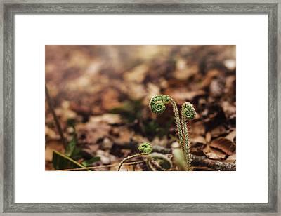Coiled Fern Among Leaves On Forest Floor Framed Print