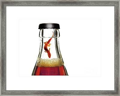 Cola_gecco Framed Print