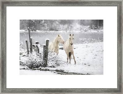 Cold Affection Framed Print