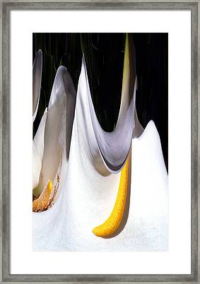 Cold Calla Poles Framed Print by Norman Andrus