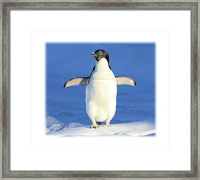 Cold Feet - Penquin In The Snow Framed Print