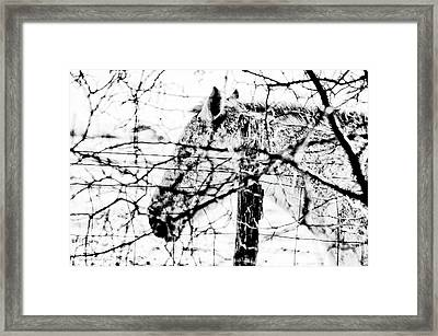 Cold Horse Framed Print