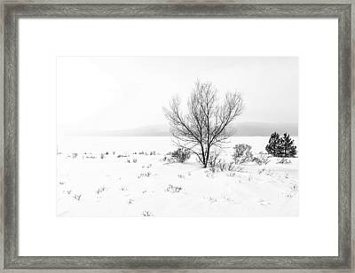 Cold Loneliness Framed Print