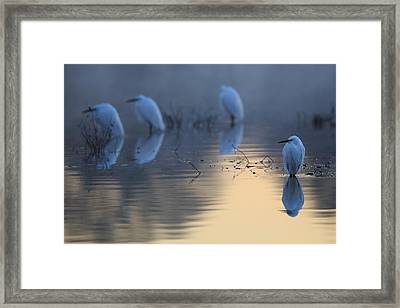 Cold Mirror Framed Print by Weevil