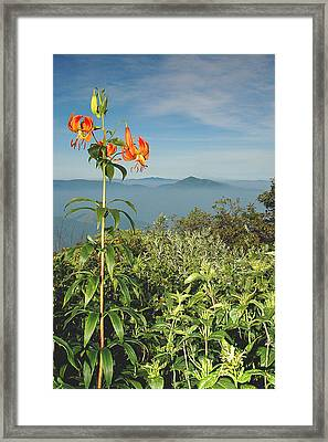 Cold Mtn. And Turk's Cap Lily Framed Print by Alan Lenk