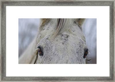 Cold Outside Framed Print by JAMART Photography