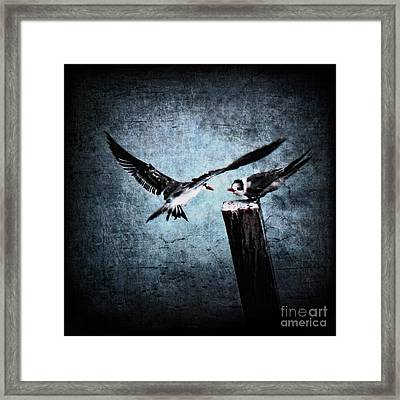 Colder Confrontations Framed Print by Andrew Paranavitana