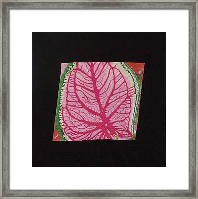 Coleus Framed Print by Jenny Williams