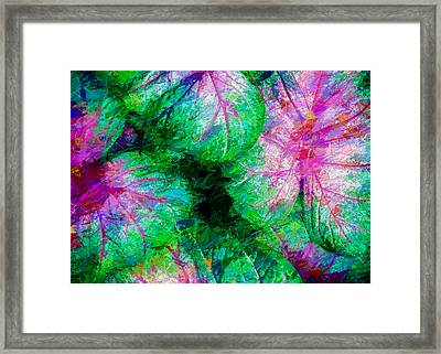 Coleus Framed Print by Paul Wear