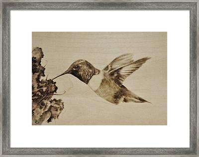Colibri Framed Print by Ilaria Andreucci