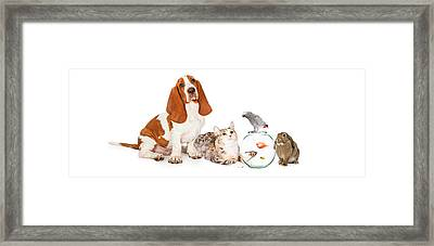 Collage Of Domestic Pets Together Framed Print