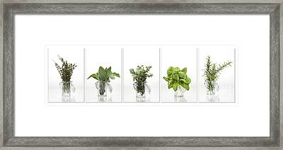 Collage Of Herbs In A Glass Jar Framed Print by Wolfgang Steiner