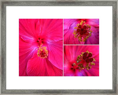 Collage With Red Hibiscus  Framed Print