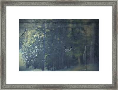 Collect Framed Print by Mark Ross