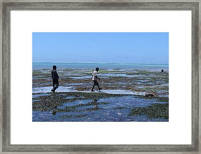 Collecting Shells On The Reef In Kenya 1 Framed Print