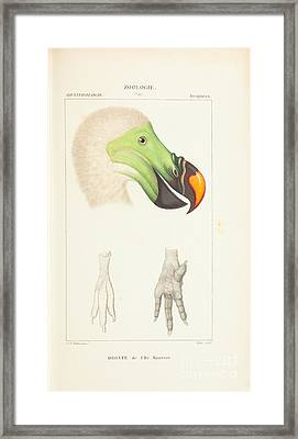 Collection De  Framed Print by Paul Gervais