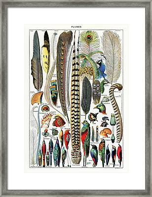 Collection Of Different Plume Types Framed Print