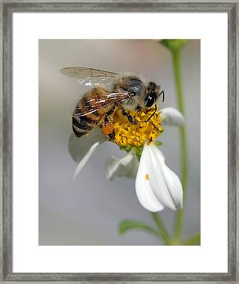 Collections Framed Print by Keith Lovejoy