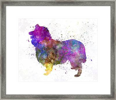 Collie 01 In Watercolor Framed Print by Pablo Romero
