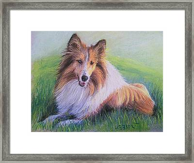 Collie Framed Print by Dave Luebbert