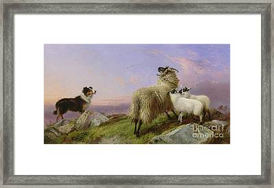Collie, Ewe And Lambs Framed Print by Richard Ansdell