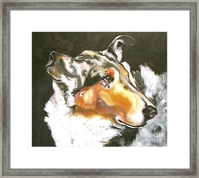 Collie Merle Smooth 2 Framed Print by Susan A Becker